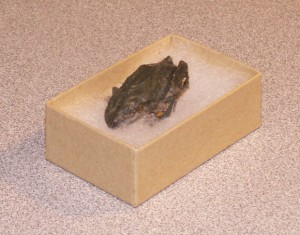 frog_mummy
