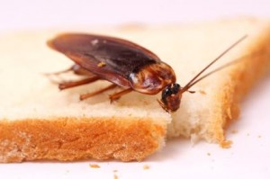 cockroachEatinYrBread